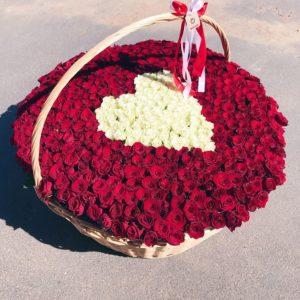 Корзина из 501 красной и белой розы